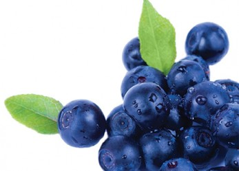 The Benefits of Blueberries