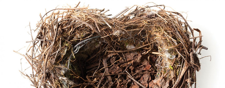 Life in An Empty Nest: Boohoo or Yahoo?