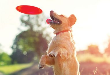 7 Tips to Keep Your Pet Safe in the Dog Days of Summer