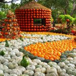 pumpkinvillage