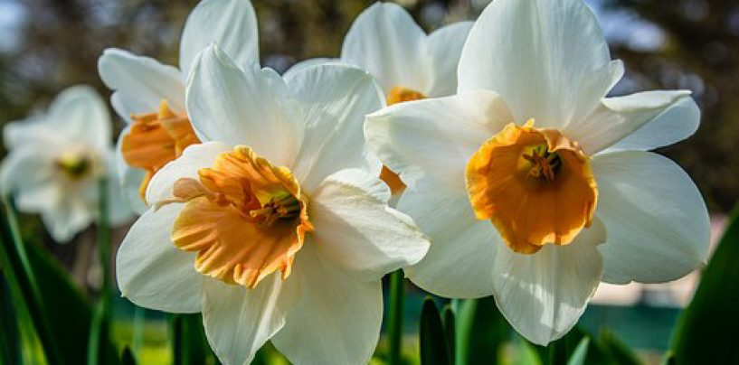 The 14th Annual Bulb & Perennial Mart