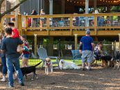 Billingsley's Dog-Friendly Destination Gets Summer-Ready with New Tap Room Opening in Austin Ranch